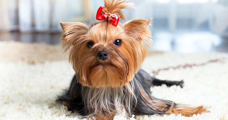 A image of a dog has red bow