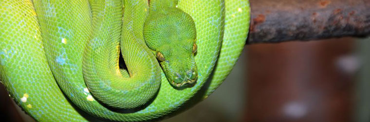 Reptile Heating Products