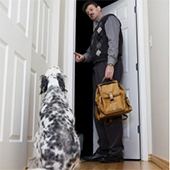 link to  How To Help Your Pet Deal With Separation Anxiety