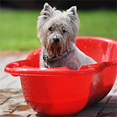 link to How To Lather With Love: Tips To Better Bathe Your Pet