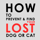 link to<br /><br />How To Prevent And Find Your Lost Dog Or Cat