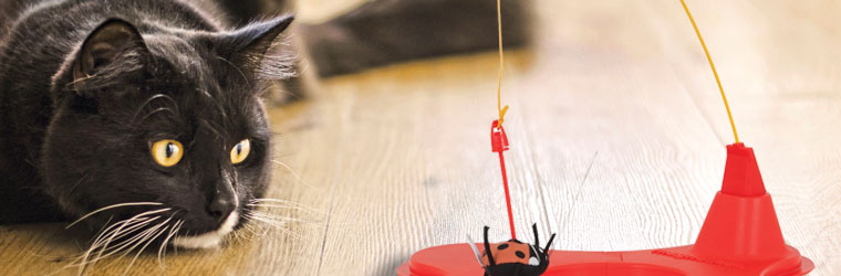 Interactive Cat Toys