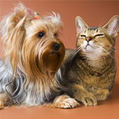 link to The Secret to Keeping pets Calm & Well-Behaved