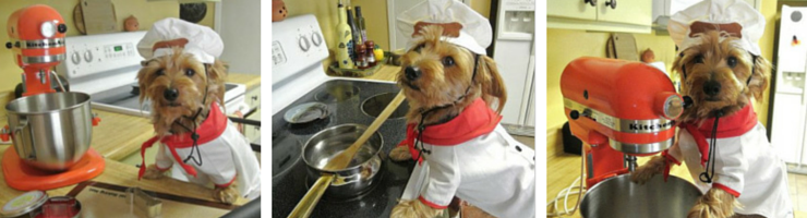 Kirby the Dorkie Canine Chef Cookbook