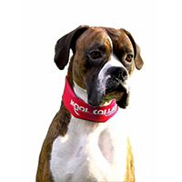 Kool Collar Stop Sign Red