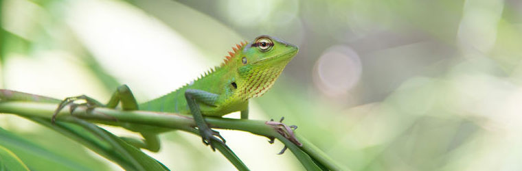 Reptile and Habitat Lighting Products