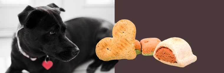 Low Calorie and Heart Healthy Dog Treats