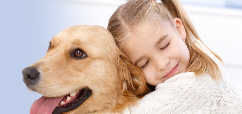 top 12 most loyal dog breeds