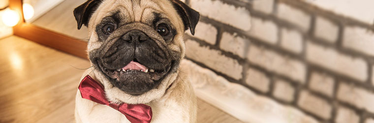 Other Apparel and Accessories for Pets