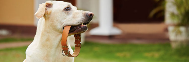 Pet ID Tags and Lights