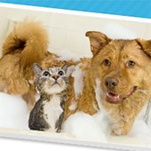 link to Pet Shampoo guide For Dogs & Cats