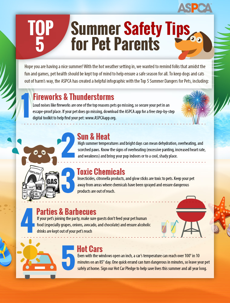 top five summer safety health tips for dog cat pet parents - infographic
