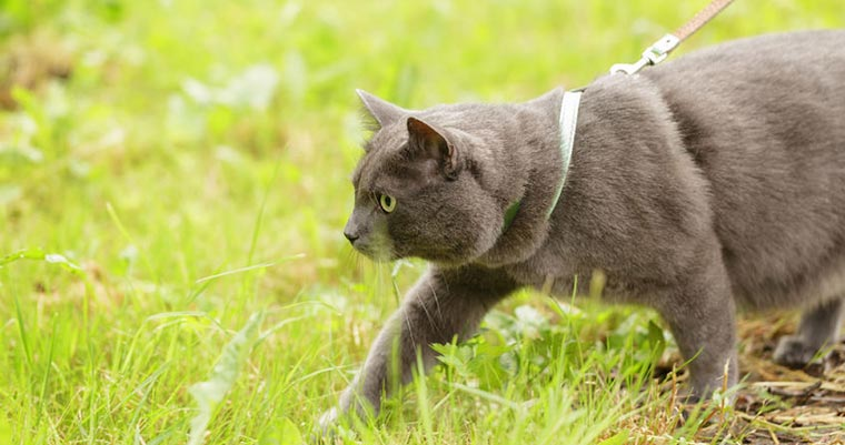 A image of a cat walking in the greass
