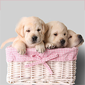 how to train your puppy to go on puppy pads