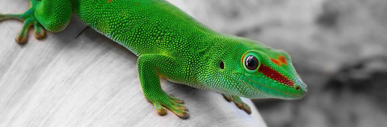 Reptile Care Supplies