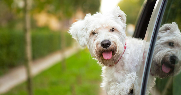 Know These 5 Summer Pet Care Tips4