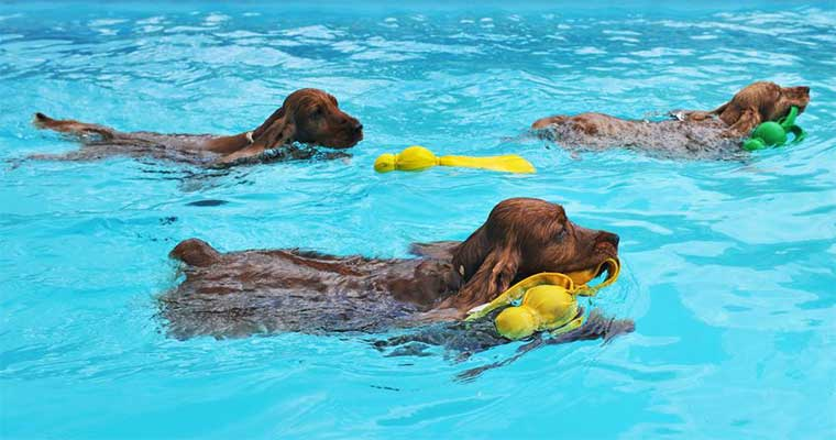 A image of dogs swimimg in the pool