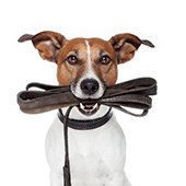 link to  op 10 Best Walking & Hiking Dog Products