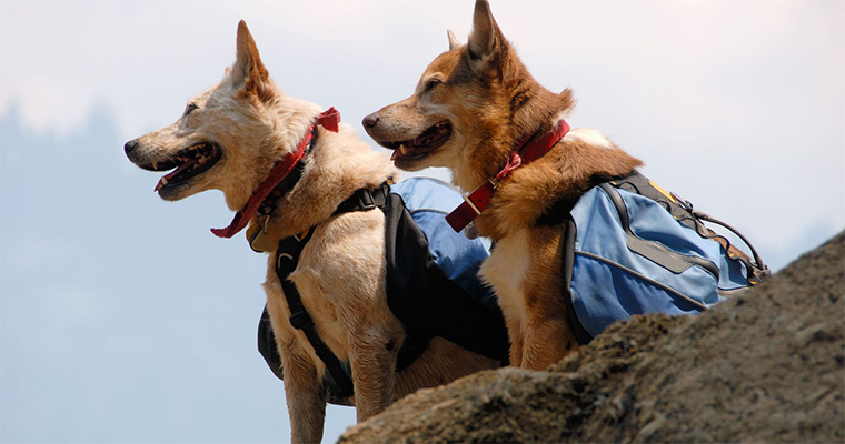 Top 10 Places to Take Your Pet on the West Coast