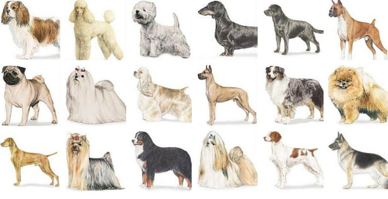 Top Large Dog Breeds For Families