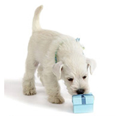 link toTop Products For New Puppies