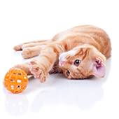 Top Selling Toys for Cats