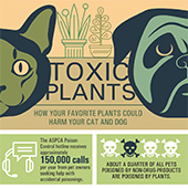 link to<br /><br />Toxic Plants - How Houseplants Can Harm Pets