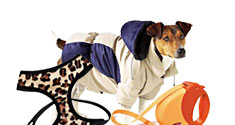 Apparel and Accessories for Dogs