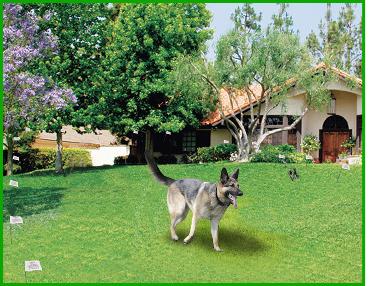 Keep your dog safe with the humane contain electric fence system