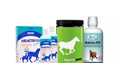 Horse Nutritional Supplements