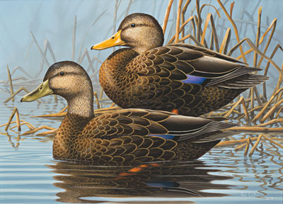 2015 N.C. Waterfowl Conservation Print and Stamp