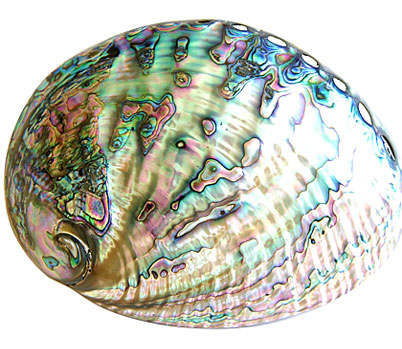 Polished Abalone
