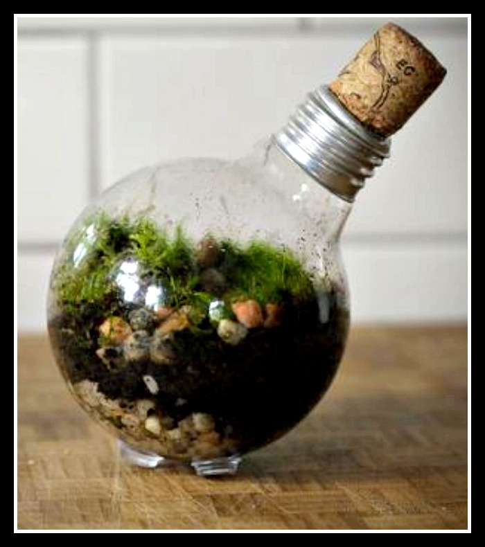 Tiniest of Terrarium Gardens - in a Lightbulb!