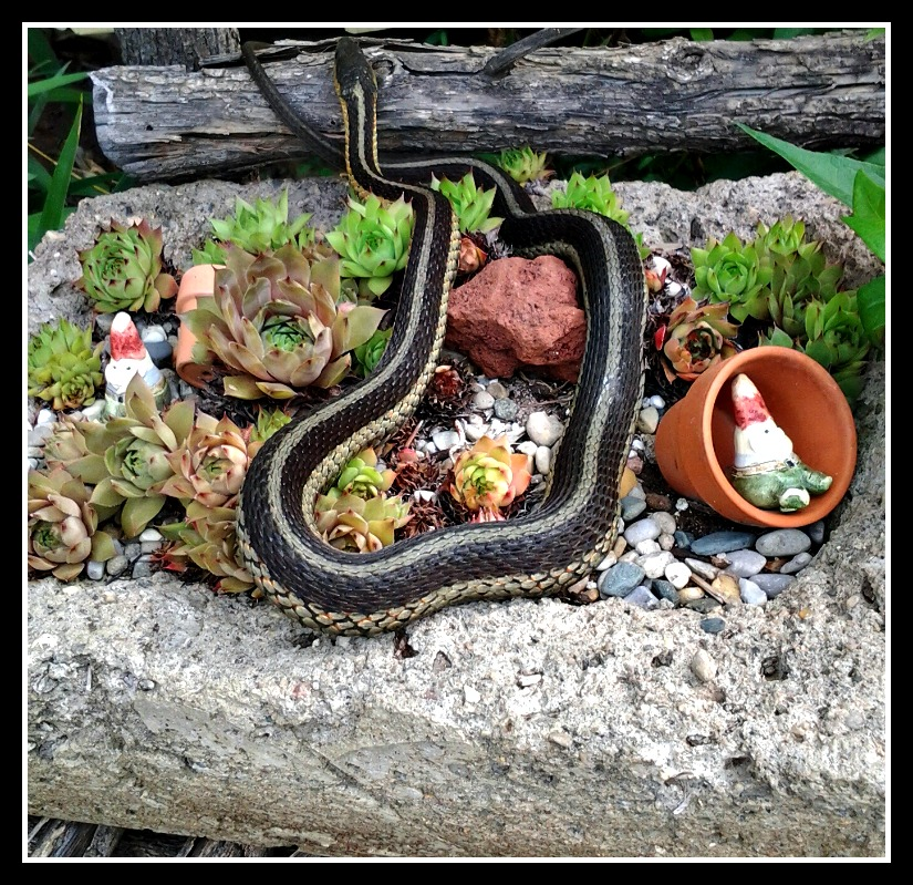 Snake Intrudes on a Tiny Gnome's Garden