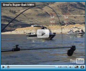 How to fish Brad's Superbait - Click Here