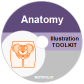 PowerPoint Drawing Toolkit Anatomy