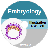 PowerPoint Drawing Toolkit Embryology