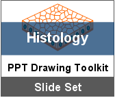 PowerPoint Drawing Toolkit Histology