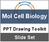 PowerPoint Drawing Toolkit Molecular Cell Biology
