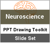 PowerPoint Drawing Toolkit Neuroscience