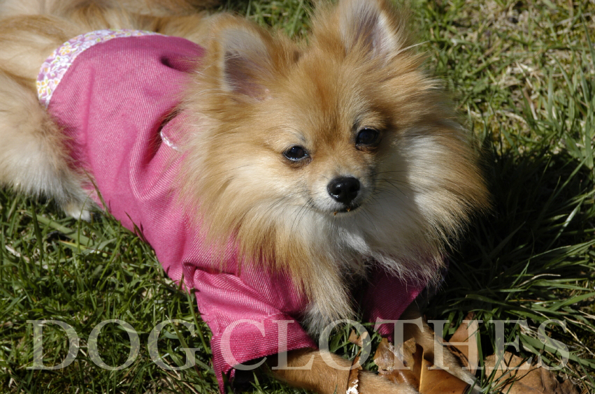 dog clothes u0026amp apparel doggie clothing u0026gtu0026gt we pay for shipping dog clothes 851x564
