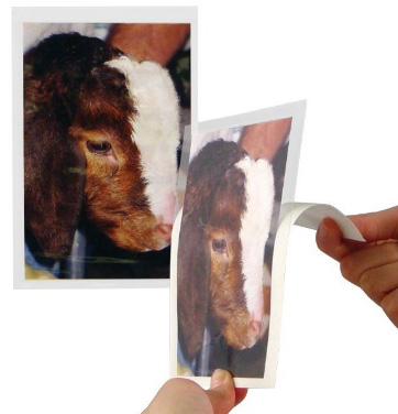 Self-Adhesive 4x6 Photo Pockets