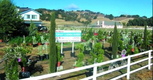 SK Topiary Wholesale Nursery