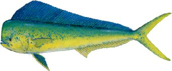 Mahi Fishing Tackle